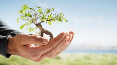 cuidar-meio-ambiente